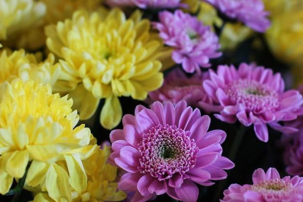 Bouquet de chrysanthèmes jaunes et violets. macrophotographie