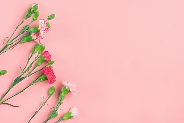 Bouquet de différentes fleurs d'oeillets roses sur fond rose vue de dessus mise à plat