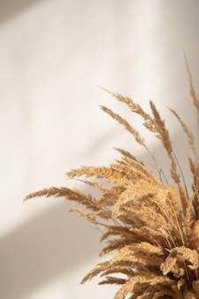 Un bouquet d'épillets secs d'herbe de la pampa sur fond de mur beige au soleil.