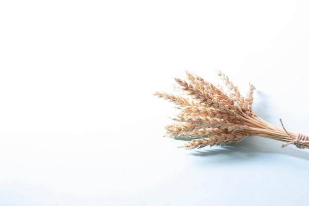 Bouquet d'épis de blé doré, épillets de céréales jaunes sèches sur mur blanc clair, gros plan