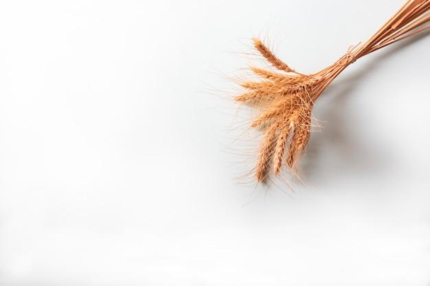 Bouquet d'épis de seigle doré, épillets de céréales sèches sur un mur clair