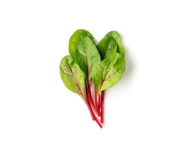 Bouquet de feuilles de bette à carde fraîche ou feuilles de salade de mangold sur fond blanc.