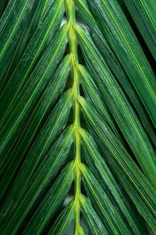 Bouquet de feuilles vertes qui ont une texture de ligne sur chaque feuille