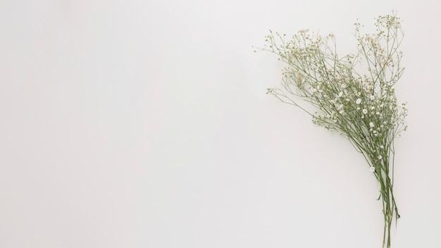 Bouquet de fines branches de plantes vertes avec des fleurs