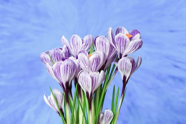 Bouquet de fleurs de crocus fleur
