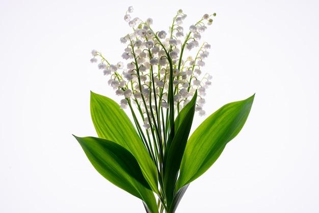 Bouquet de fleurs et de feuilles de muguet isolé sur blanc