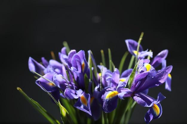 Bouquet de fleurs fraîches. cadeau de vacances à votre bien-aimé. contexte saint-valentin. rose, tulipe, composition florale d'iris.