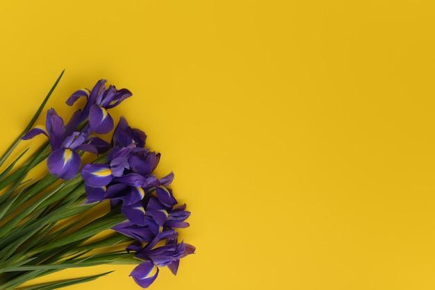 Bouquet de fleurs d'iris est isolé sur un fond de printemps jaune vif. carte de voeux de fleurs avec un espace pour le texte. espace copie, vue de dessus, mise à plat. fleurs dans un coin du cadre.