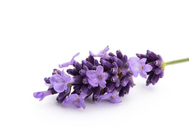 Bouquet de fleurs de lavande attaché isolé