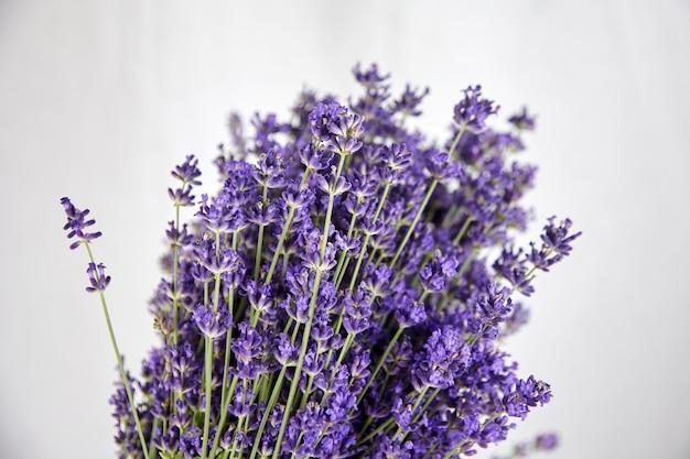 Bouquet de fleurs de lavande violette fraîche sur blanc