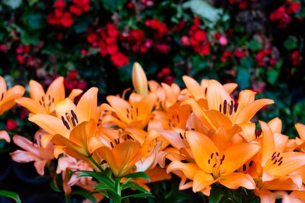 Bouquet de fleurs de lis dans le jardin. fleurs de printemps