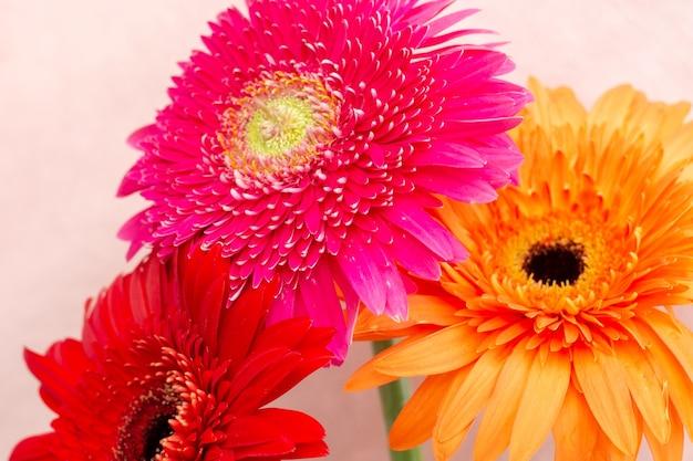 Bouquet de fleurs lumineuses de chrysanthèmes