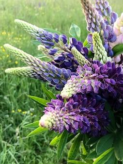 Bouquet de fleurs de lupin violet sur fond d'herbe verte dans le domaine de l'été