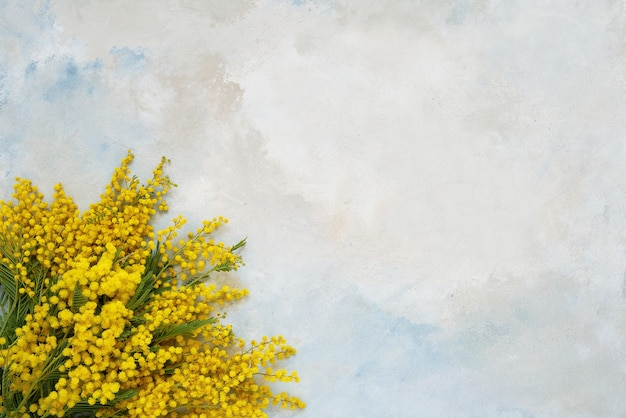 Bouquet de fleurs de mimosa sur fond clair copie espace vue de dessus