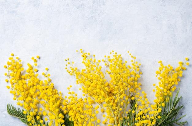 Un bouquet de fleurs de mimosa jaune sur le béton clair
