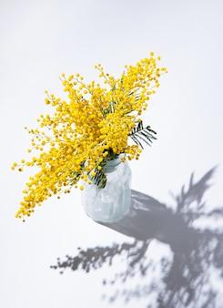 Un bouquet de fleurs de mimosa jaune se dresse dans un vase en verre avec une ombre sur fond blanc