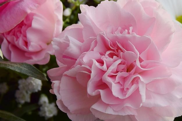 Bouquet de fleurs d'oeillets roses sur fond rose clair. filtre doux.