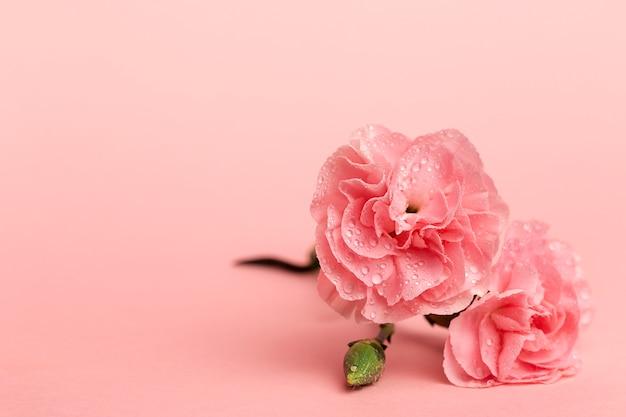 Bouquet de fleurs d'oeillets roses