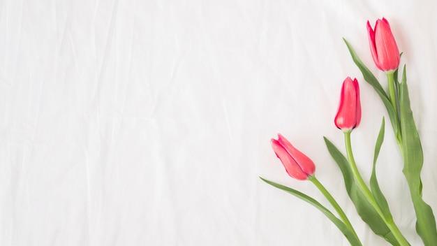 Bouquet de fleurs roses sur les tiges avec des feuilles vertes