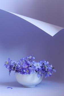 Bouquet frais de délicates fleurs de printemps hépatique hepatica nobilis dans un vase blanc sur une boucle de papier bleu