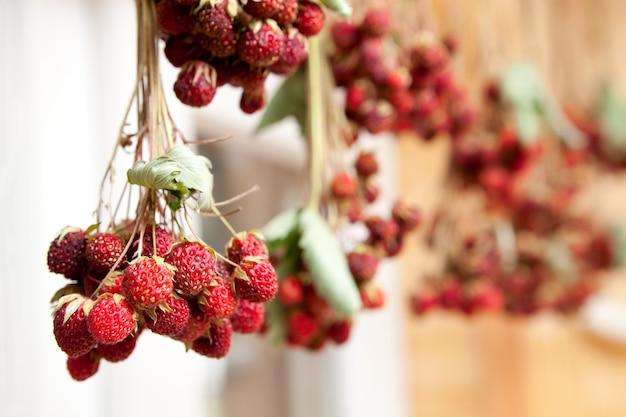 Un bouquet de fraises séchées pour le thé