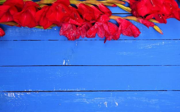 Un bouquet de glaïeuls rouges en fleurs