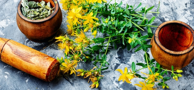 Bouquet de hypericum en fleurs