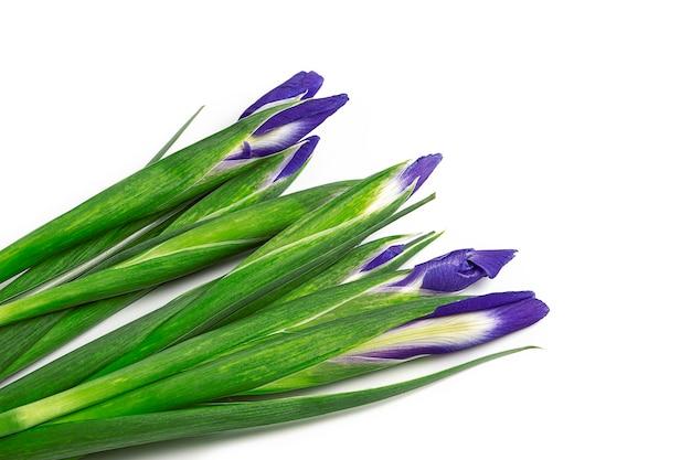 Bouquet d'iris violets isolés sur une surface blanche