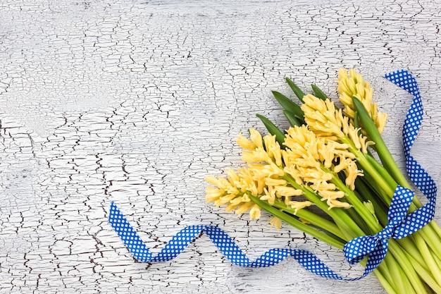 Bouquet de jacinthes jaunes orné d'un ruban bleu sur fond blanc. vue de dessus, espace de copie