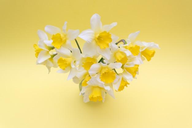 Bouquet de jonquilles jaunes sur jaune, printemps