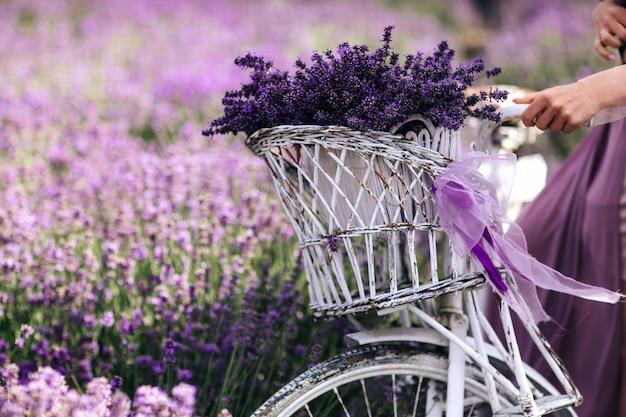Un bouquet de lavande dans un panier sur un vélo dans un champ de lavande une fille