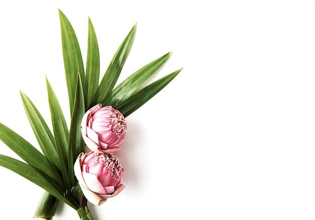 Bouquet de lotus rose
