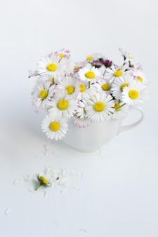 Bouquet de marguerites communes dans une tasse de thé sur fond blanc