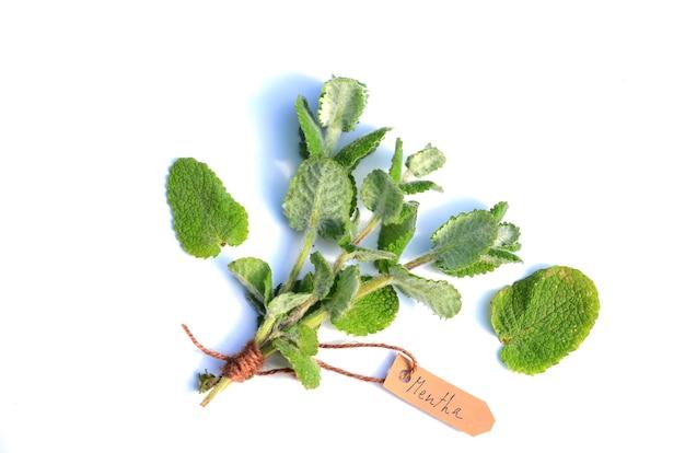 Bouquet de menthe (mentha sp) sur une surface blanche. une étiquette indique le nom de la plante