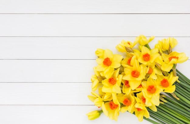 Bouquet de narcisse de printemps frais sur un mur en bois blanc. vue de dessus, espace copie