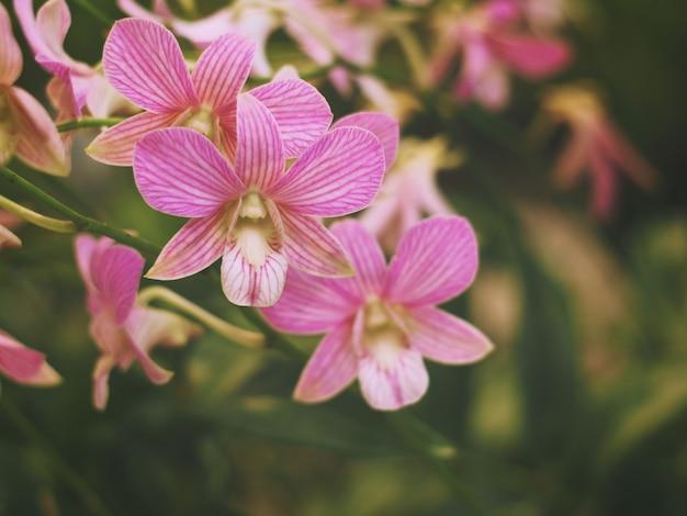 Bouquet d'orchidée rose et feuilles vertes