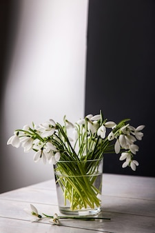 Bouquet de perce-neige blanc galanthus nivalis dans un bocal en verre sur des tons sombres sur une surface en bois, nature morte dans l'insouciance feinte.