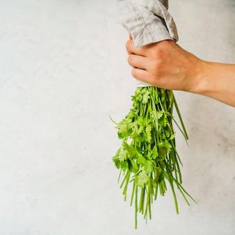 Bouquet de persil dans la main de la personne sur fond blanc