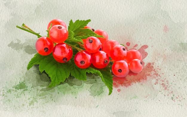 Bouquet de photo de groseille rouge sur fond peint à l'aquarelle avec la texture du papier.