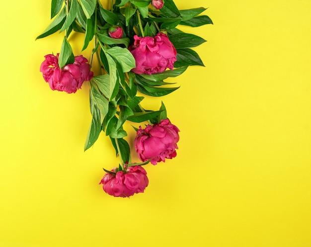 Bouquet de pivoines rouges aux feuilles vertes sur jaune