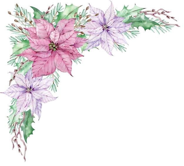 Bouquet de poinsettia aquarelle coin rose avec des feuilles vertes, des branches de pin et de genévrier. arrangement floral d'hiver. belles fleurs roses et violettes