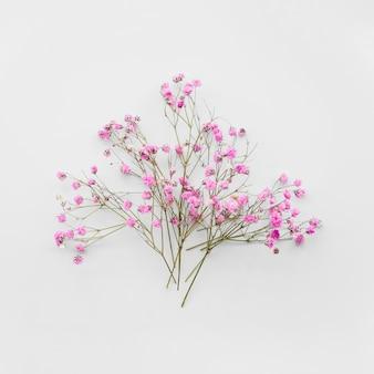 Bouquet de rameaux de fleurs douces