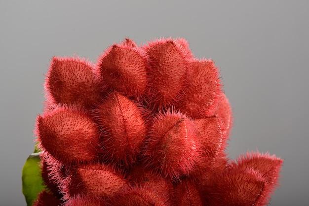 Bouquet de rocou (urucum), ses graines sont utilisées comme colorant alimentaire naturel, photographiées en studio avec un fond neutre.