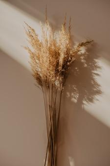 Bouquet de roseaux beige sur tableau blanc. la lumière du soleil depuis la fenêtre