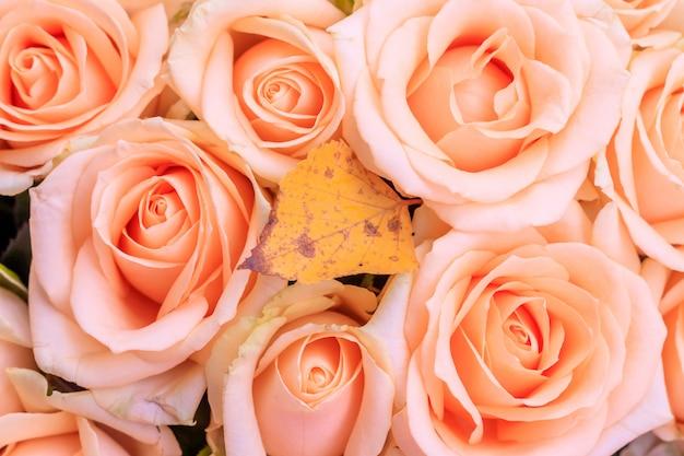 Bouquet de roses délicates. un fond de roses florales. belles fleurs. un cadeau pour les vacances. fleurs fraîches