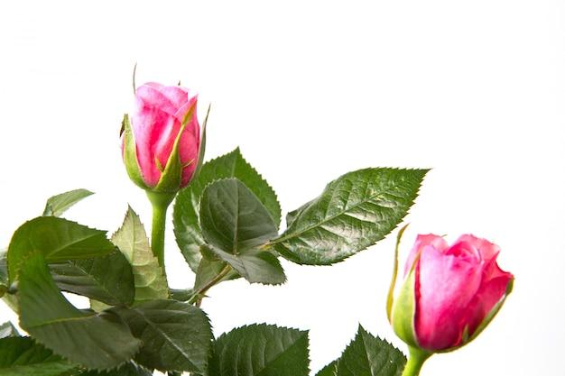 Bouquet de roses fraîches