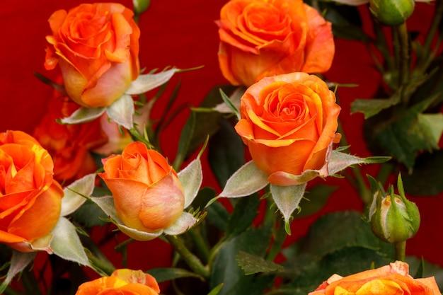 Bouquet de roses oranges sur fond rouge