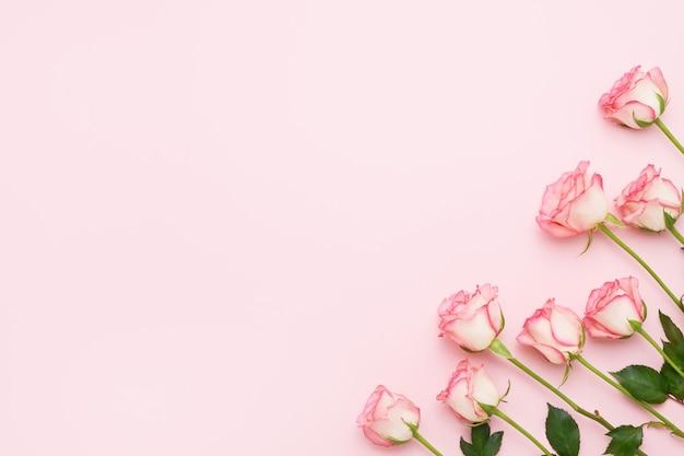 Bouquet de roses roses sur fond rose.
