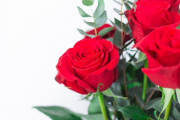 Bouquet de roses rouges sur fond blanc, gros plan.