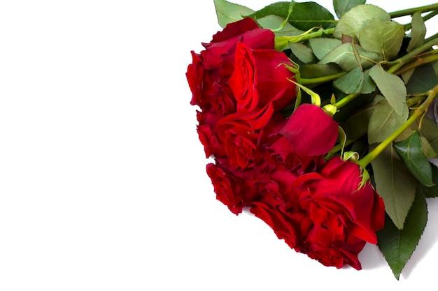 Un bouquet de roses rouges sur fond blanc